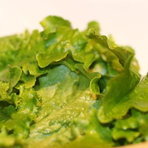 veggie-patch-3